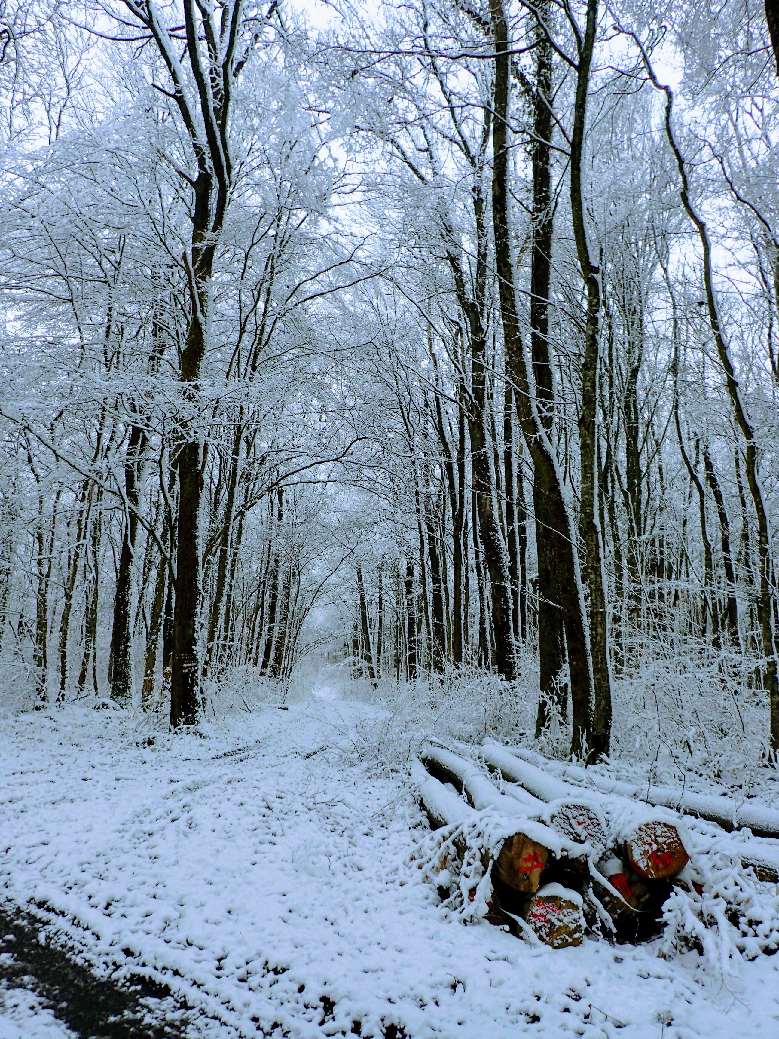 Le VTT avec neige