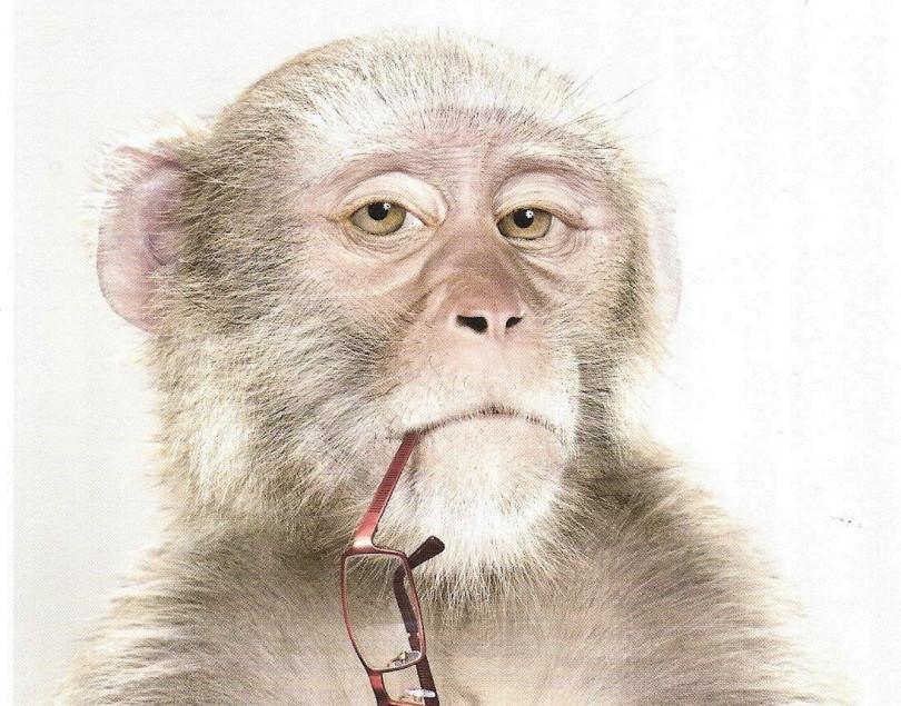 vieux-singe-810x635.jpg
